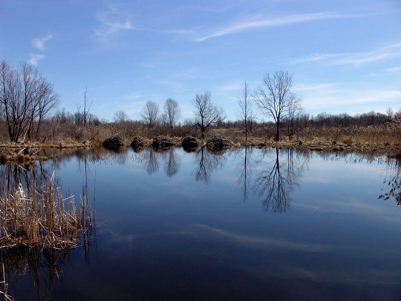 Beaver dams on Quaker Pond