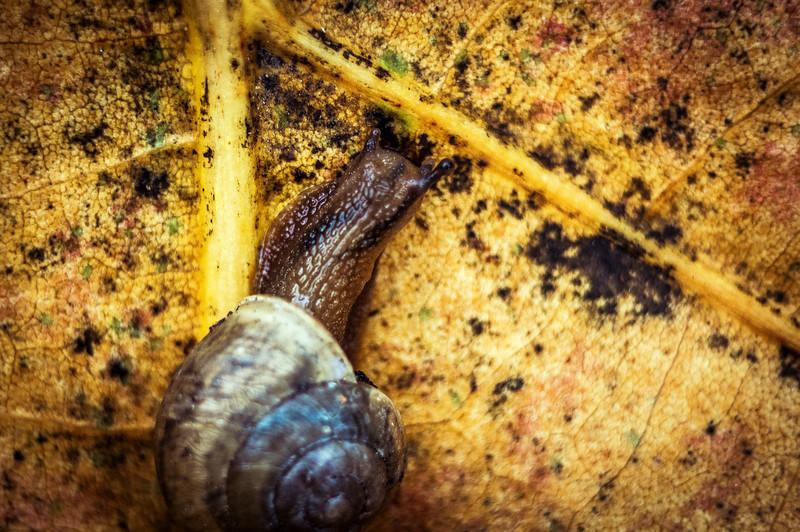 Slug Life (Sanibel Island, FL)