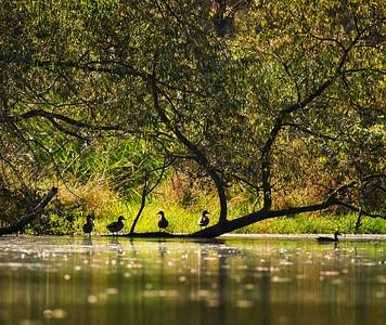 Old Woman Creek