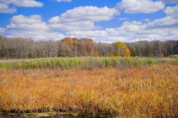 Seven Ponds Trail