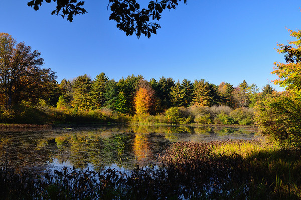 Fall Colors at Tinker's Creek Nature Preserve
