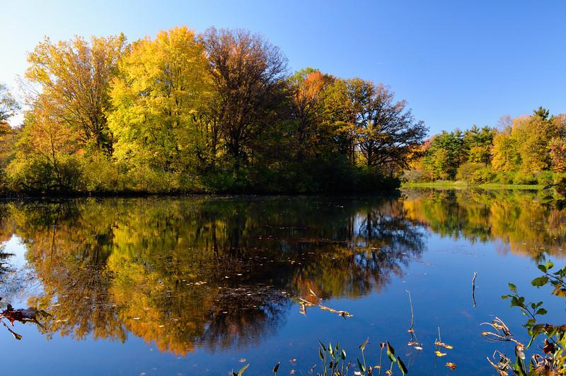 Fall Colors at Tinker's Creek Nature Preserve