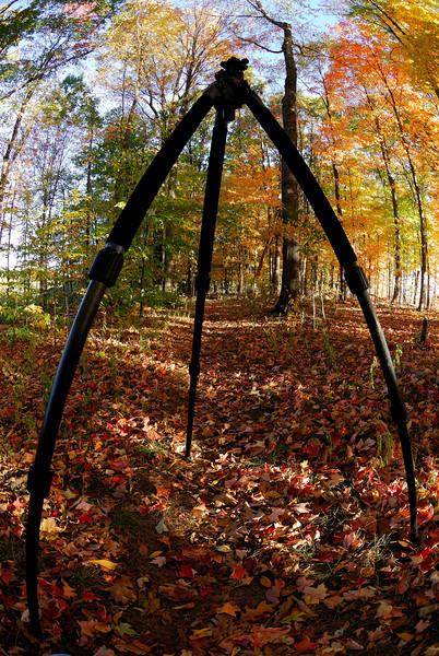 My Bow Legged Tripod  - Tinker's Creek Nature Preserve