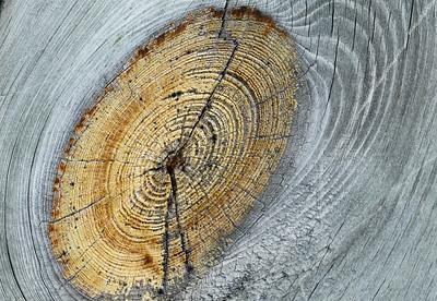 Pattern and Texture - Observation Deck - Eagle Creek Nature Preserve