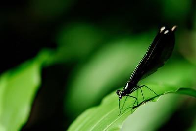 Dragonfly - Eagle Creek Nature Preserve