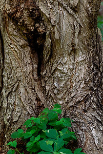 Tree Trunk - Eagle Creek Nature Preserve