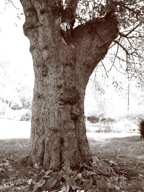"The ""Ghost Eye Tree"""