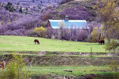 Peaceful Pasture.