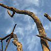 Tree branches at Zebula South Africa view 5