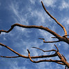 Tree branches at Zebula South Africa view 4
