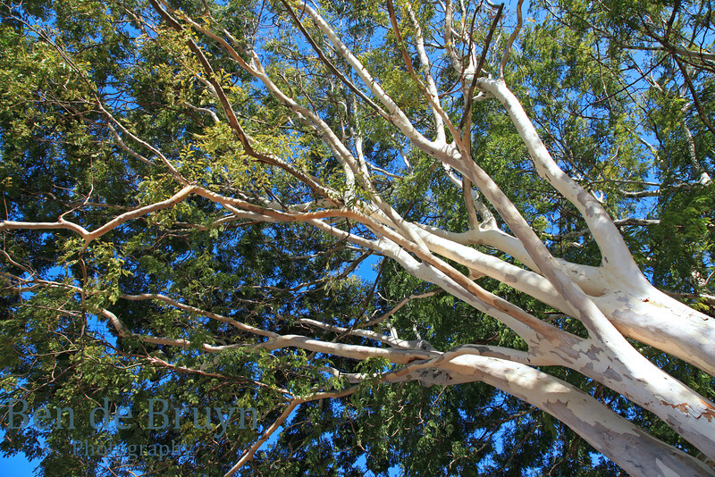 Tree branches at Hazyview South Africa