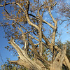Tree branches at Zebula South Africa view 3