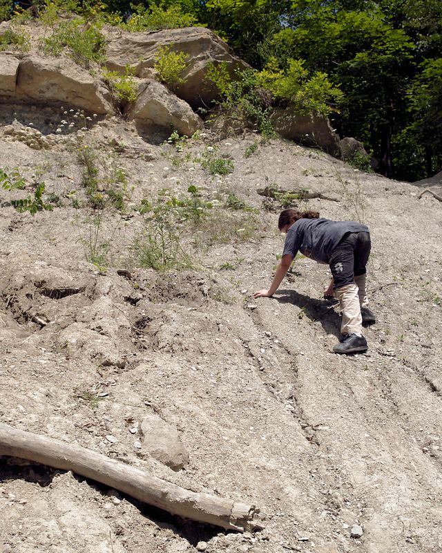 On the hunt for more fossils.