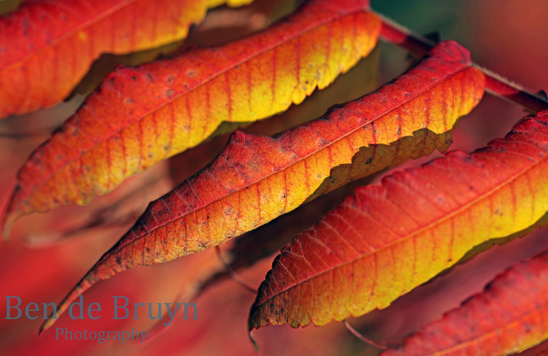 Autumn leaves in bright red and orange colors and in interesting pattern