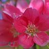 Geneve spring flowers view 3