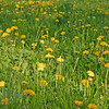 Geneve spring flowers view 2