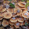 Geneve autumn mushrooms view 4