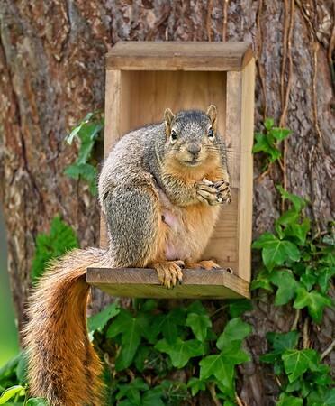 Squirrels 2021