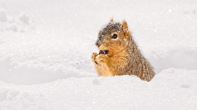 Neighborhood Squirrels2021