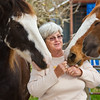 """Tennesee Walking Horses from Walking Horse Farm, owned by Marilyn and Richard Kinney, in Cut N Shoot, Texas. Website info on the horses can be found at  <a href=""""http://www.walkingk.com"""">http://www.walkingk.com</a>."""