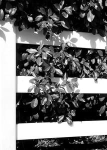 E in Black & White