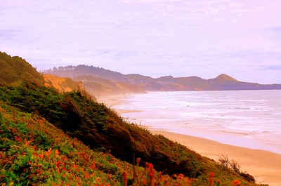 A foggy red morning near a beach in Northern California.  This photograph is protected by the U.S. Copyright Laws and shall not to be downloaded or reproduced by any means without the formal written permission of L Good - noelxgood@sbcglobal.net