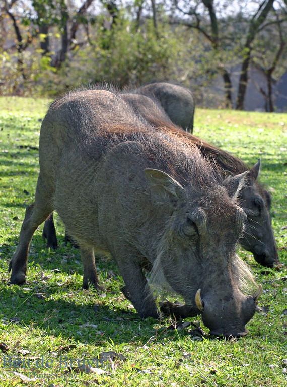 Kirkmans Camp 2007 Warthog