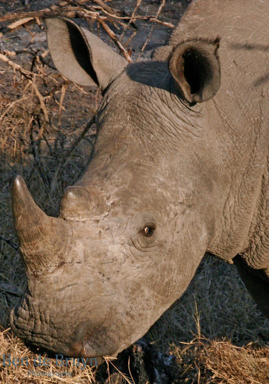 Kirkmans Camp park 2007 Rhinos 2