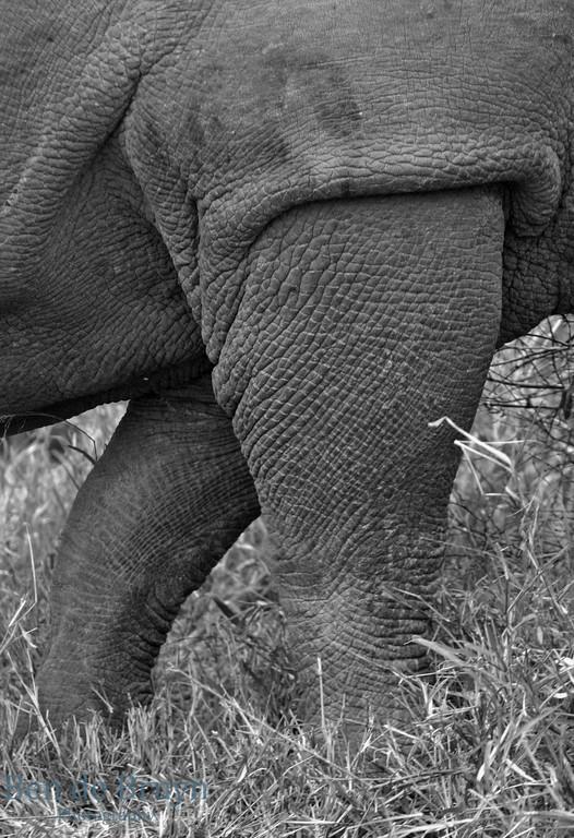 June 2006 Dulini rhino 2
