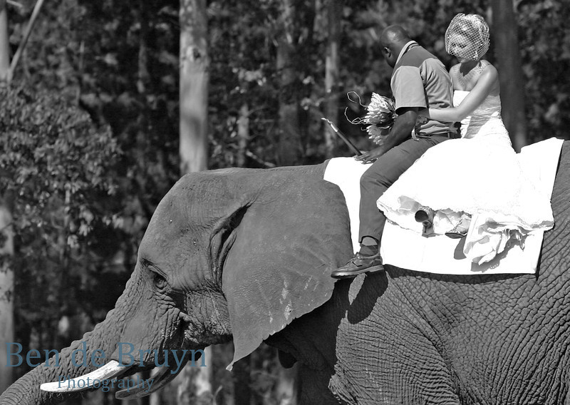 Jan 2010 Bride on elephant 2