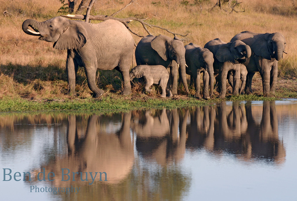 June 2006 Dulini elephants at water hole 2