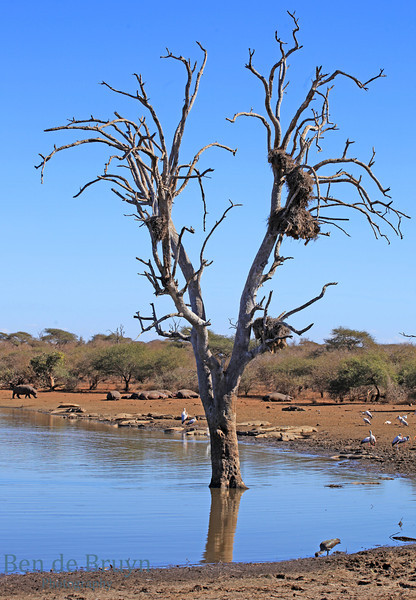 Aug 2012 Kruger Park Waterhole D