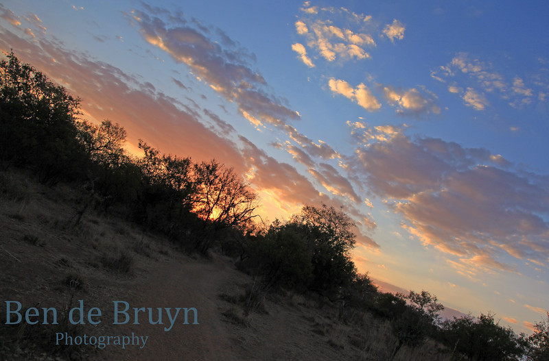 July 2012 Zebula sunset in the bush 1