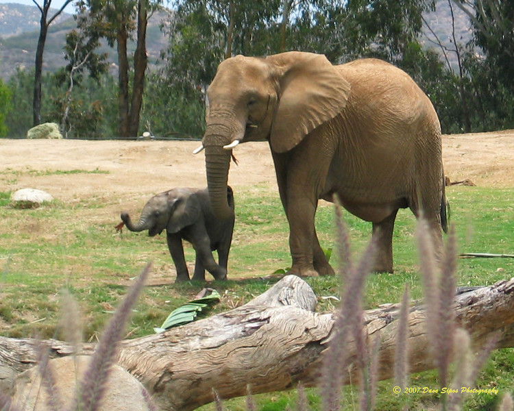 San Diego Wild Animal Park - July 2007