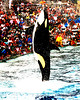 Sea World San Diego - July 2007