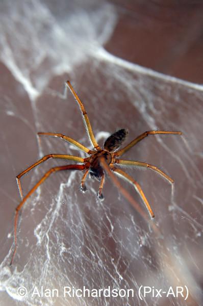 2_Spider_AR