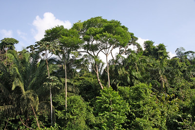 The rainforest of Panama