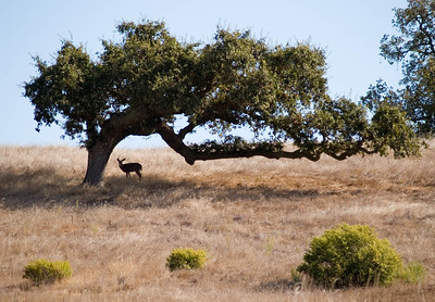 Deer With Tree 3