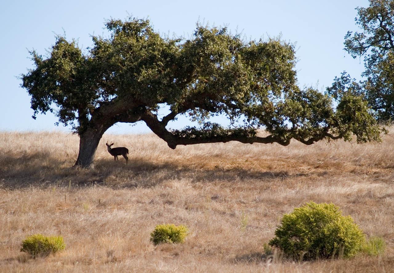Deer With Tree 3