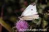 1_Butterfly_AR
