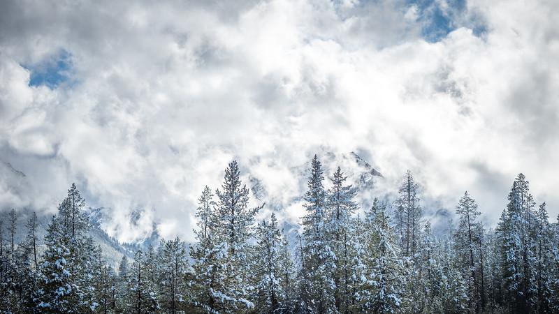 Cloudy Mountain Trees