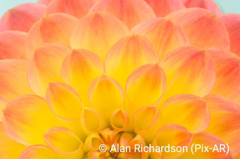 3_Flower_AR