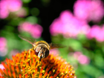 Flower And Bee 3