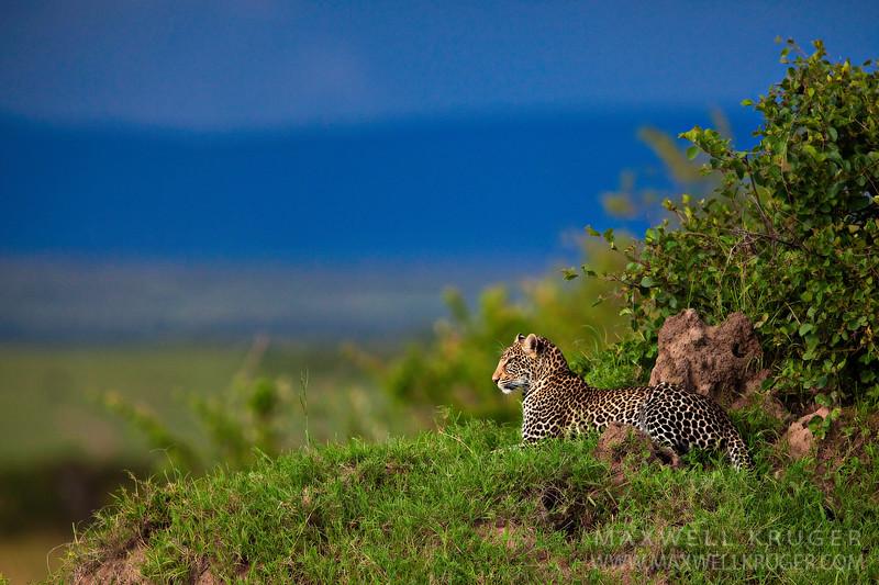 Maasai Mara<br>Kenya<br>2010