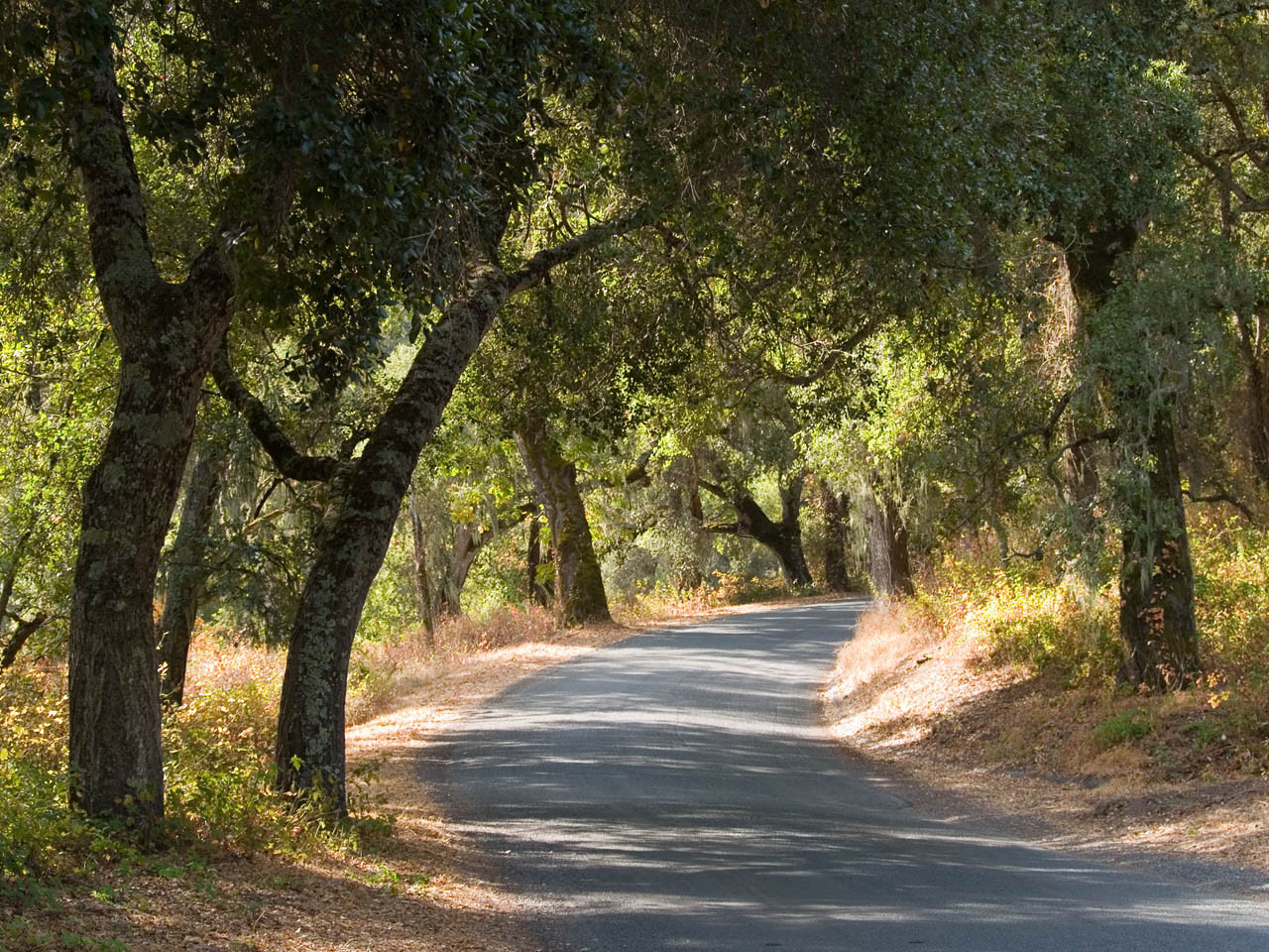 Road With Trees 3