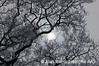 2_Snow on Trees_AR