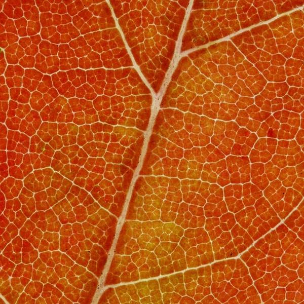 11-2 leaf macro