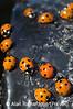 5_ladybirds_AR