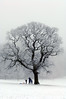4_Snow on Trees_AR