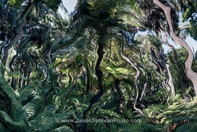 Liquid Fern Forest